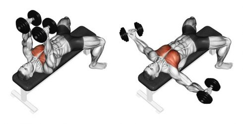 Dumbbell Chest Flyes