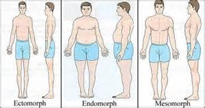 Different Body Types
