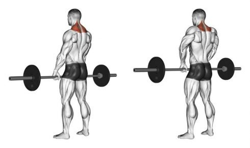 Barbell Shrugs for Traps