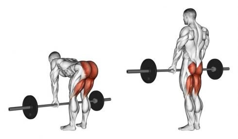 Back Deadlifts Back Workout