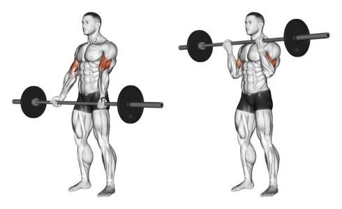 Bicep Barbell Curls